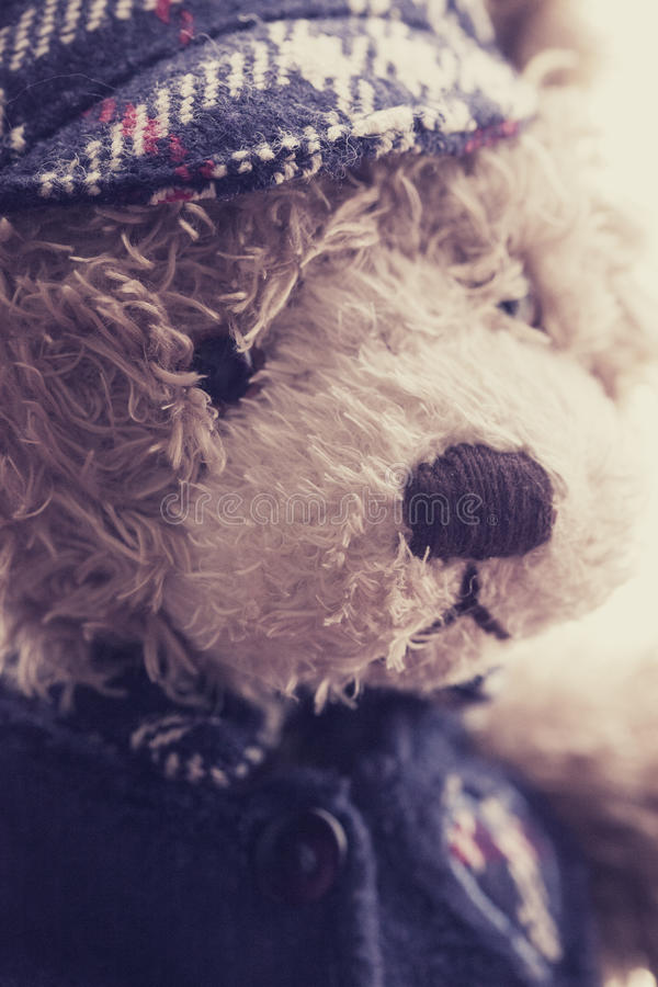 Download Teddy Bear stock photo. Image of furry, lovable, innocent - 31787100