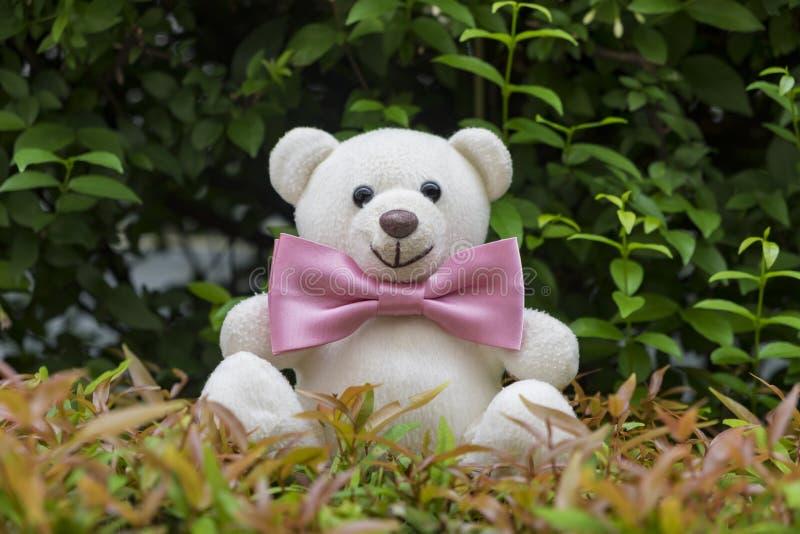 Teddy Bear con una corbata de lazo fotos de archivo
