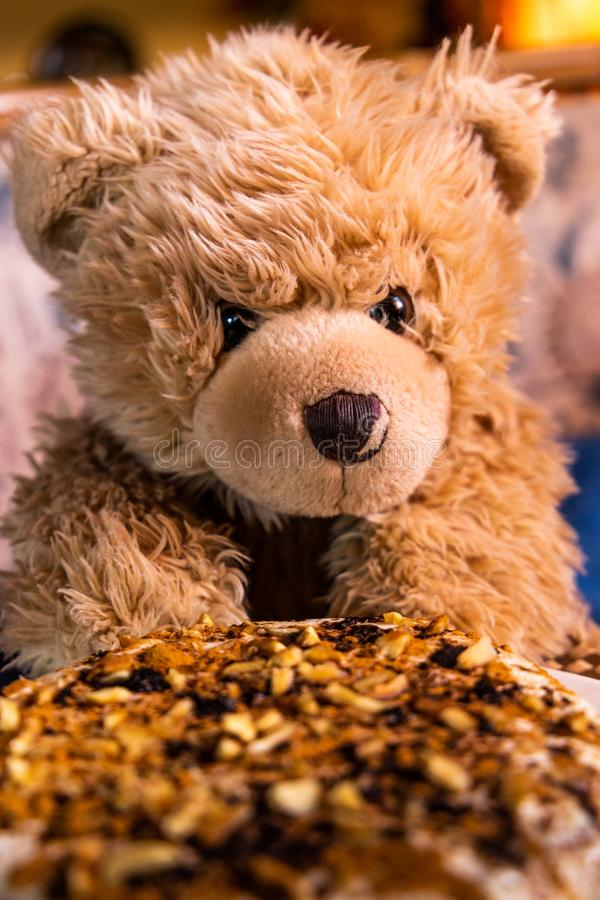 Teddy bear Dranik and cake.  stock photos