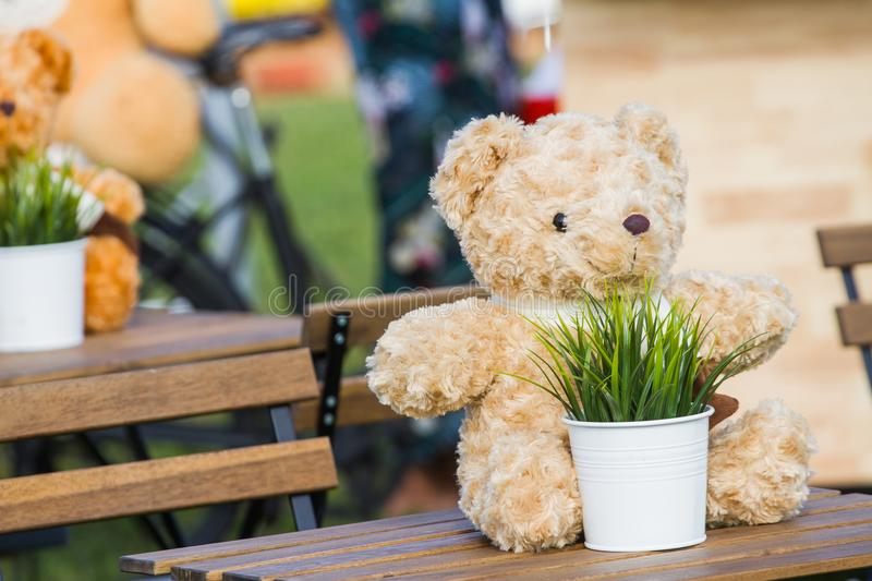Teddy bear and grass in the pot and white. Put it on the table as the background. Teddy bear and grass in white pots placed on the wooden table in the stock photo