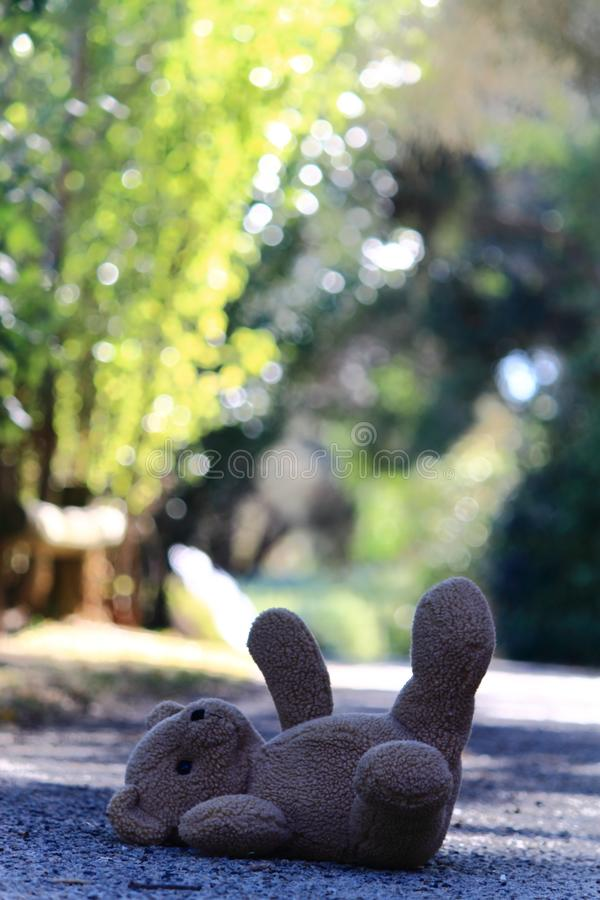 Download Teddy bear on the ground stock photo. Image of sunny - 23649822