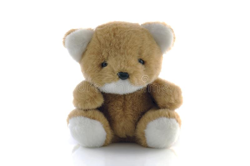 Teddy bear isolated on white background.  royalty free stock photo
