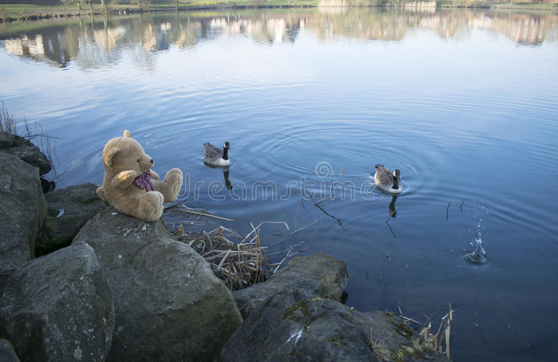 Teddy Bear At Lake royalty-vrije stock afbeelding