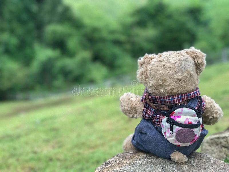 Teddy bear looks around. With suspicion. Background blur royalty free stock photos