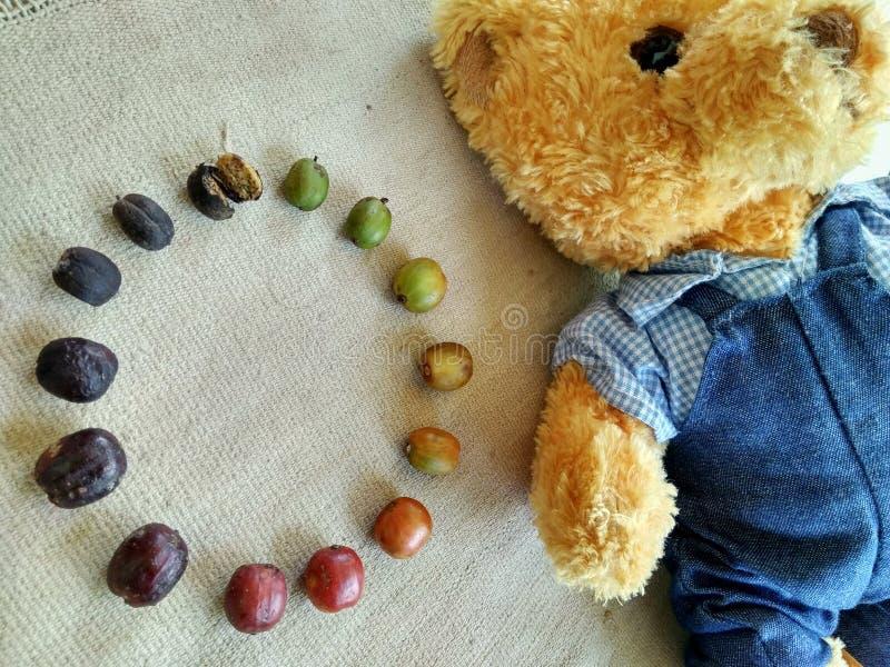 Teddy Bear och coffebönor arkivfoto