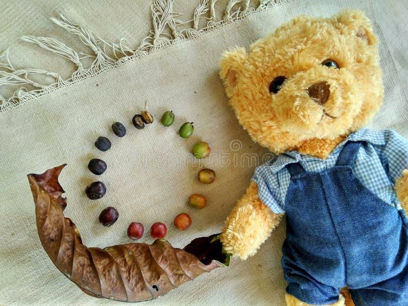 Teddy Bear och coffebönor arkivbild