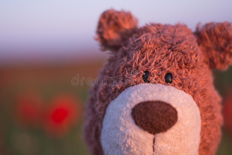 Teddy Bear Portrait imagem de stock royalty free