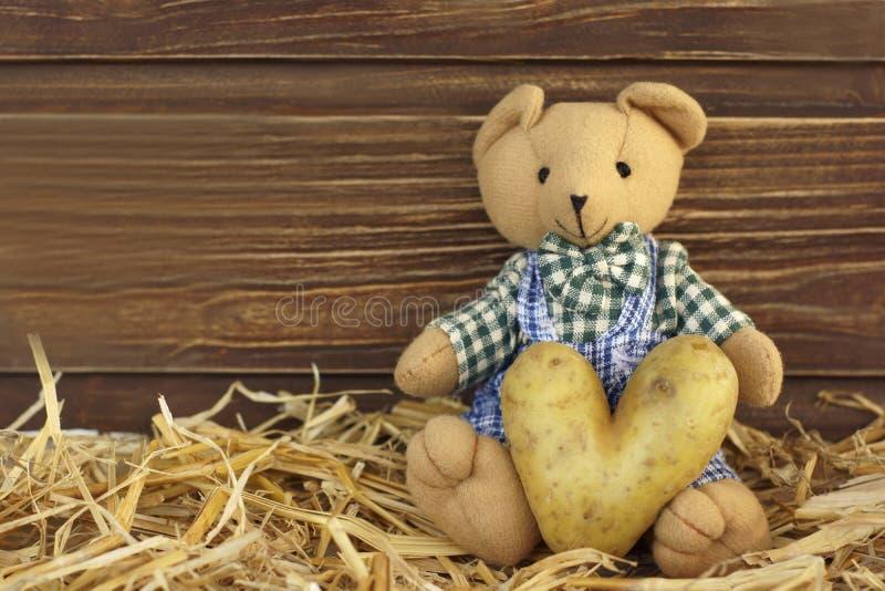 Teddy bear with potato heart royalty free stock photos