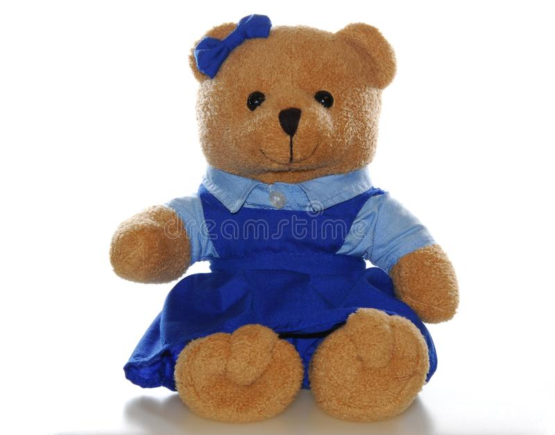 Teddy bear in school uniform stock images