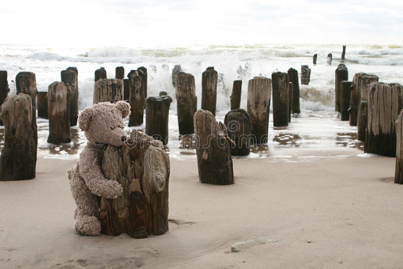 Download Teddy Bear by sea stock image. Image of stuffed, child - 12892651