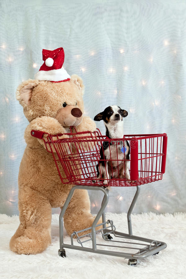 Teddy bear, shopping cart, chihuahua stock images