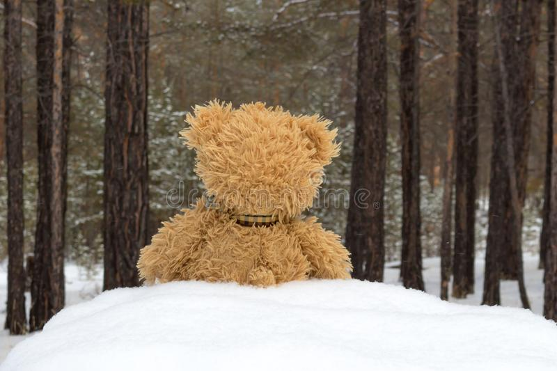Teddy bear in winter forest stock images