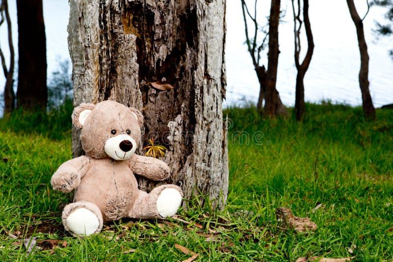 Teddy Bear sitting near old tree stump royalty free stock image