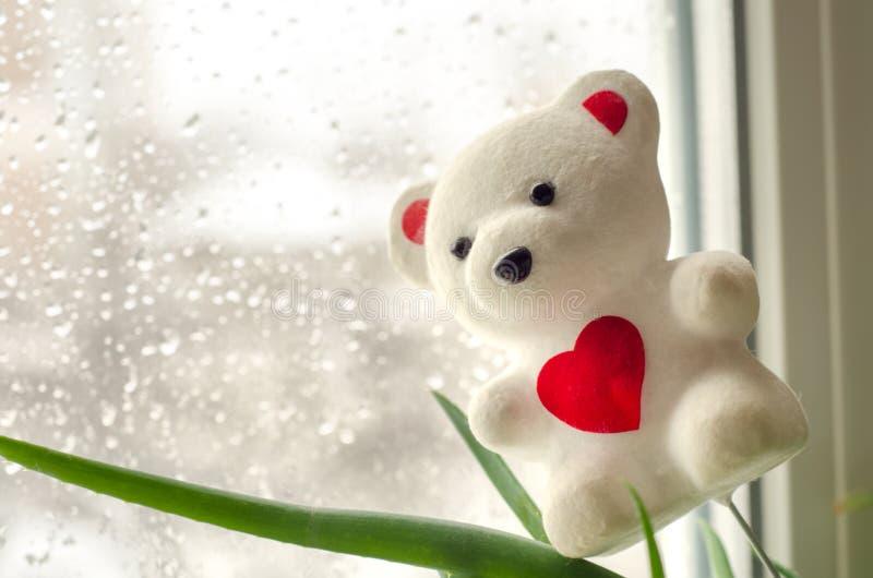 Teddy Bear stock fotografie