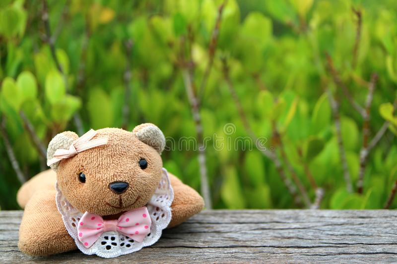Teddy Bear on the Wooden Fence with Blurred Vibrant Green Golden Mangrove Field in Background. Thailand royalty free stock photo