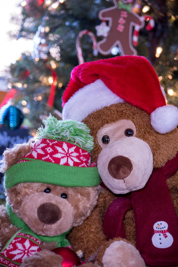 Teddy bears portrait close up stock images