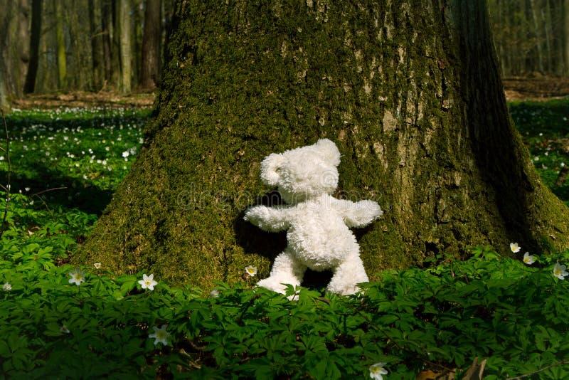 Teddy hugs tree royalty free stock image