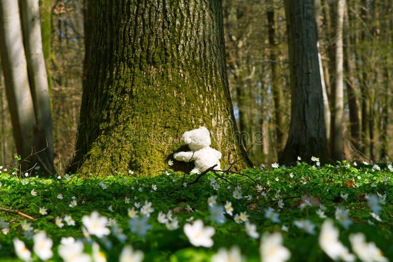 A teddy hugs a tree stock photos