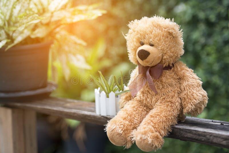 Teddybär, der in der Zeit des frühen Morgens des Parks mit Sonnenlicht sitzt stockfotografie