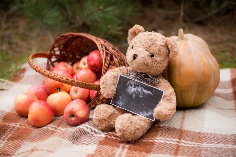 Teddybärholding-Ultraschallfoto des Babys, Herbsthintergrund mit Korb und Äpfel lizenzfreie stockfotografie