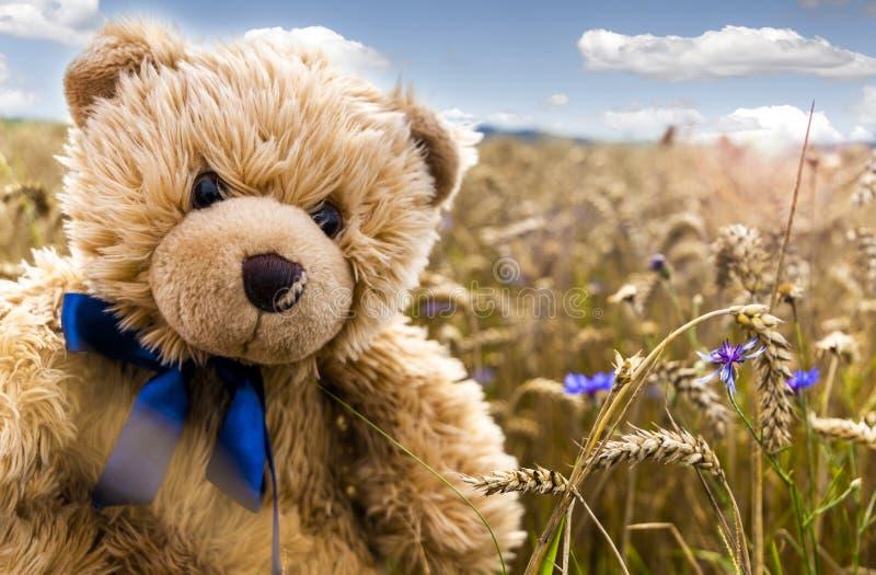Teddybärperle Dranik auf dem Sommergebiet stockbilder