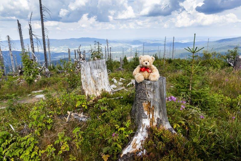 Teddybeer die in Dreisessel-berg lopen royalty-vrije stock afbeelding