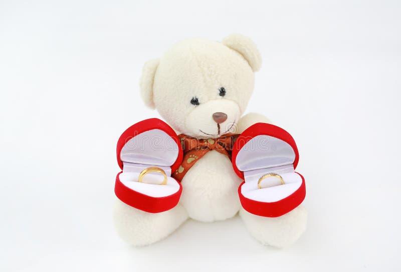 Teddybeer die rode doos met binnen trouwringen houden stock foto's