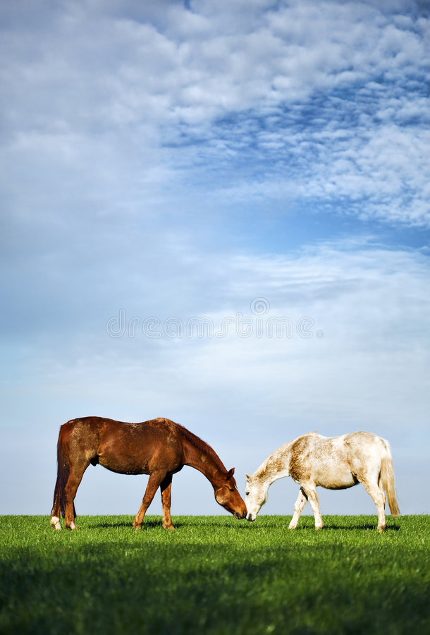Tedere paarden op groene weide royalty-vrije stock afbeeldingen