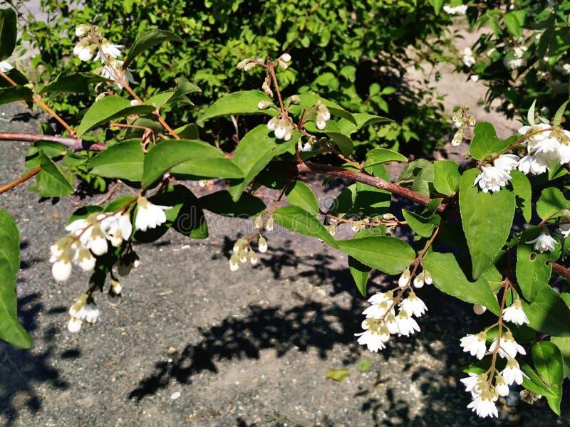 Tedere witte de zomerbloemen op de wijze van hoog-contrasthdr royalty-vrije stock afbeeldingen