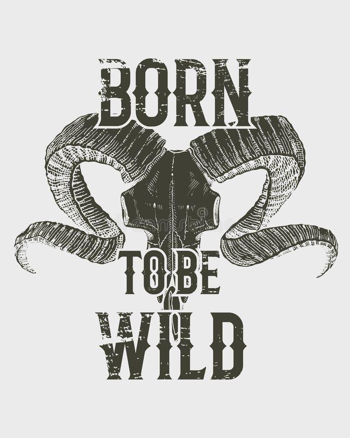 Tee a cabra de montanha do crânio da cópia com chifres, gráficos do t-shirt, projeto com animal Fundo do grunge do vetor vintage ilustração stock