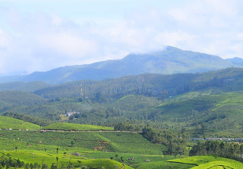 Tee-Gärten, grüne Hügel und blauer Himmel - üppige grüne Naturlandschaft in Munnar, Idukki, Kerala, Indien lizenzfreie stockbilder