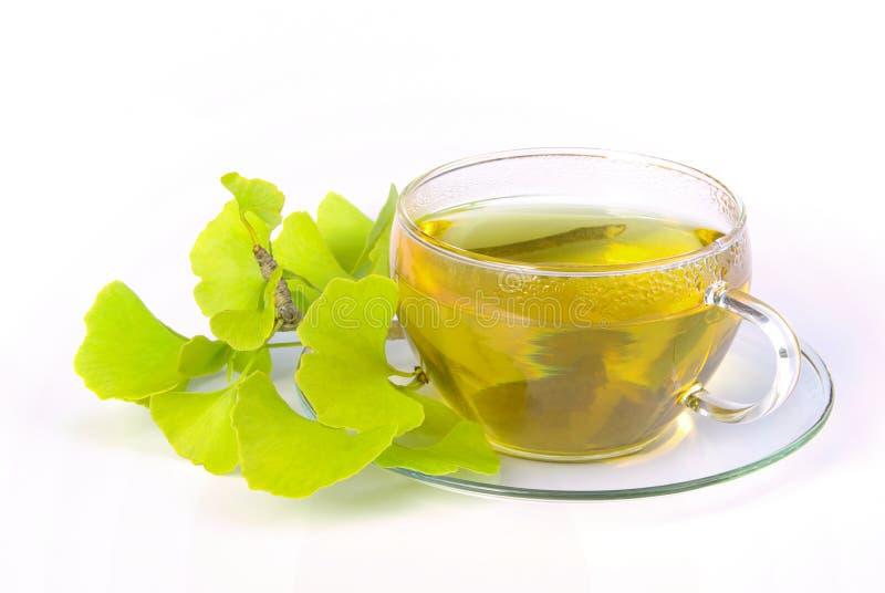 Tee Ginkgo lizenzfreie stockfotos
