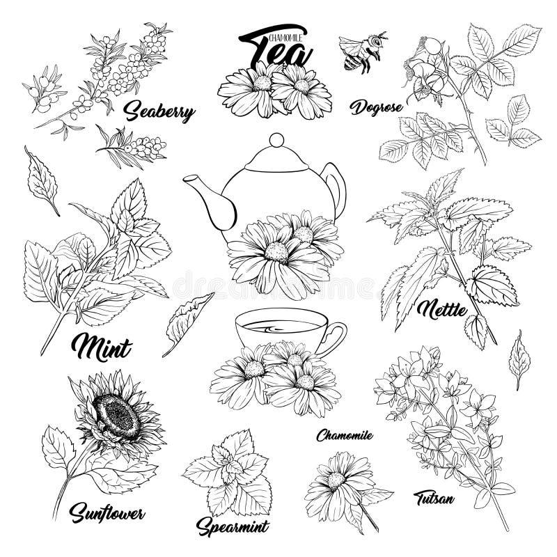 Tee-Kraut-einfarbiger gravierender Satz vektor abbildung