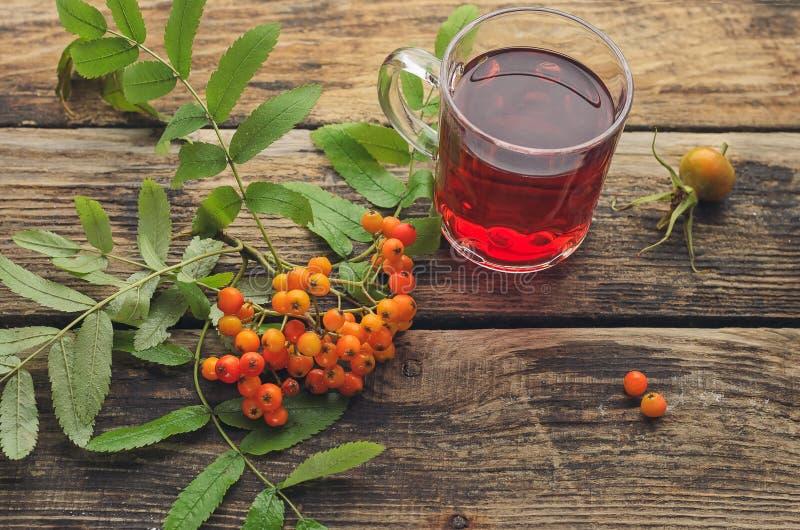 Tee mit einem Bündel der roten Eberesche lizenzfreie stockfotografie