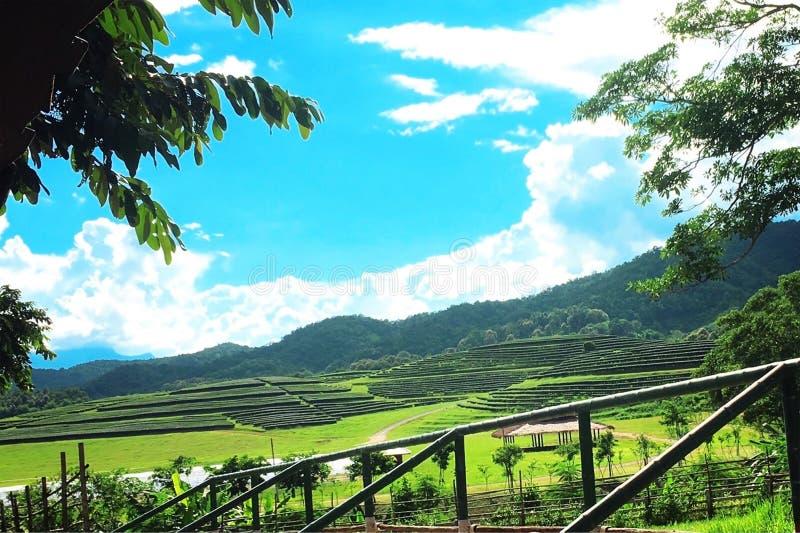 Tee-Plantage, Chaingrai, Thailand, Asien lizenzfreies stockfoto