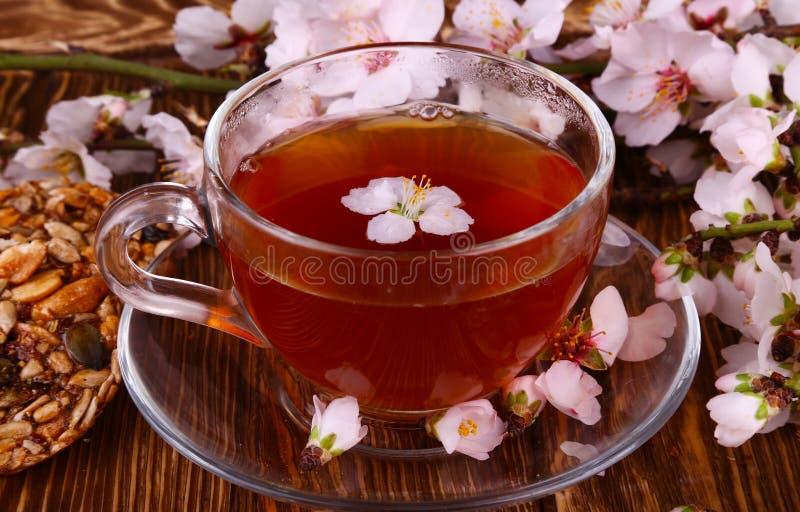 Tee und eine Niederlassung von Kirschblüten stockbilder