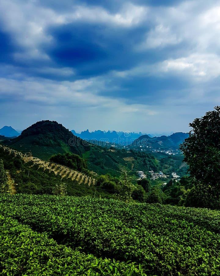 Tee und mehr Tee lizenzfreie stockfotos