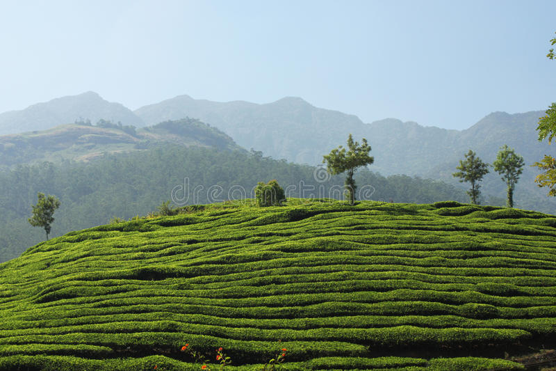 Tee-Zustand von Kerala stockbild