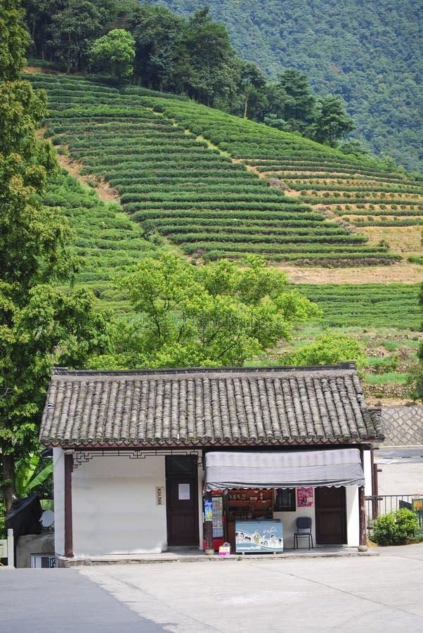 Teedorf, China stockfoto