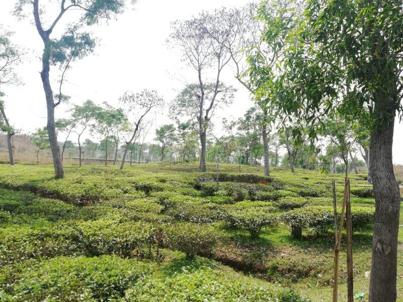 Teegartenbild lizenzfreie stockfotografie