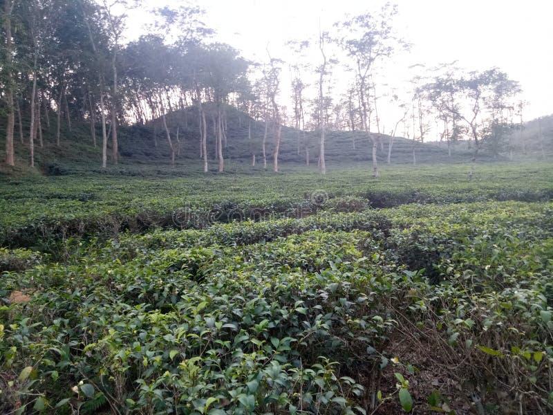 Teegartenschöne aussicht lizenzfreie stockfotografie