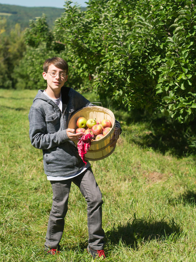 Download Teen Boy In An Apple Orchard Picking Fruit Royalty Free Stock Photo - Image: 26637095