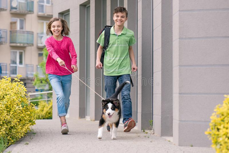 Teen boy and girl playing with puppy. Cute children - happy teen boy and girl playing with puppy Australian Shepherd dog, outdoors. Friendship and care concept stock photos