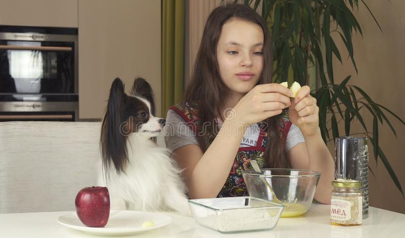 Teen girl with dog Papillon prepare cookies, knead the dough royalty free stock photo