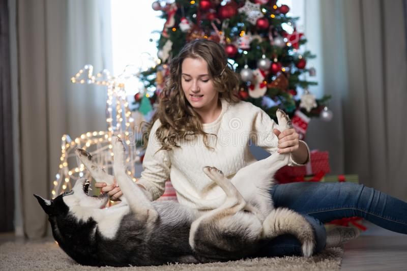 Teen girl with dog in a room for Christmas stock photography