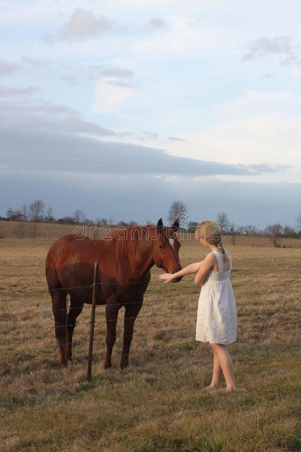 Download Teen Girl With a Horse stock image. Image of animal, white - 28612357