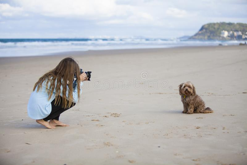 Girl photographing dog on beach. A teen girl photographing a dog on the beach royalty free stock photos