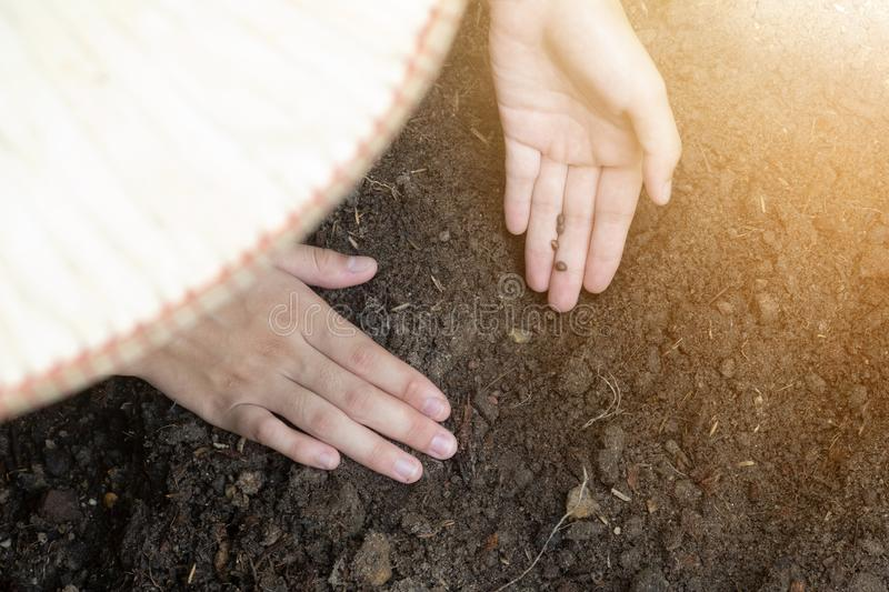 Teen hands planting the seed into the soil over nature background and sunlight. Farmer holding Young plant, new life growth. Ecology, money saving, development royalty free stock photos