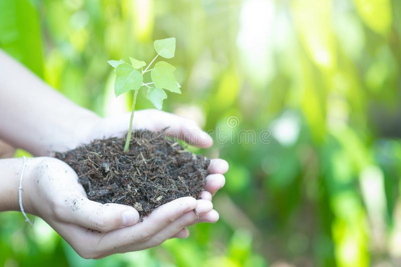 Teen hands planting the seedlings into the soil over nature background and sunlight. Farmer holding Young plant, new life growth. Ecology, money saving royalty free stock photos