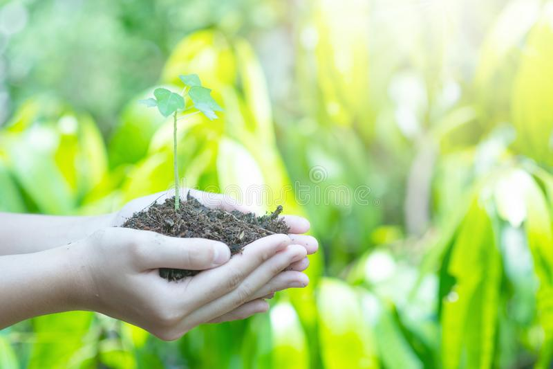 Teen hands planting the seedlings into the soil over nature background and sunlight. Farmer holding Young plant, new life growth. Ecology, money saving stock photo